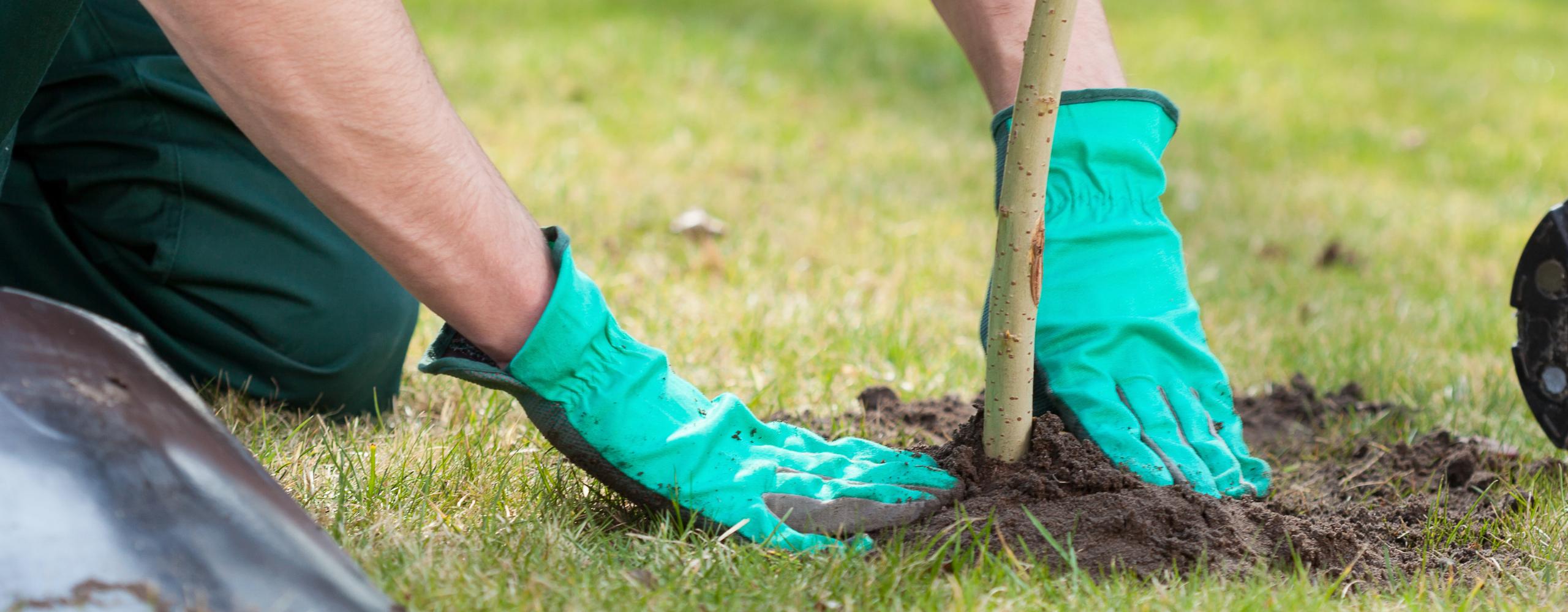 Planting Trees Across the Irish Jesuit Province